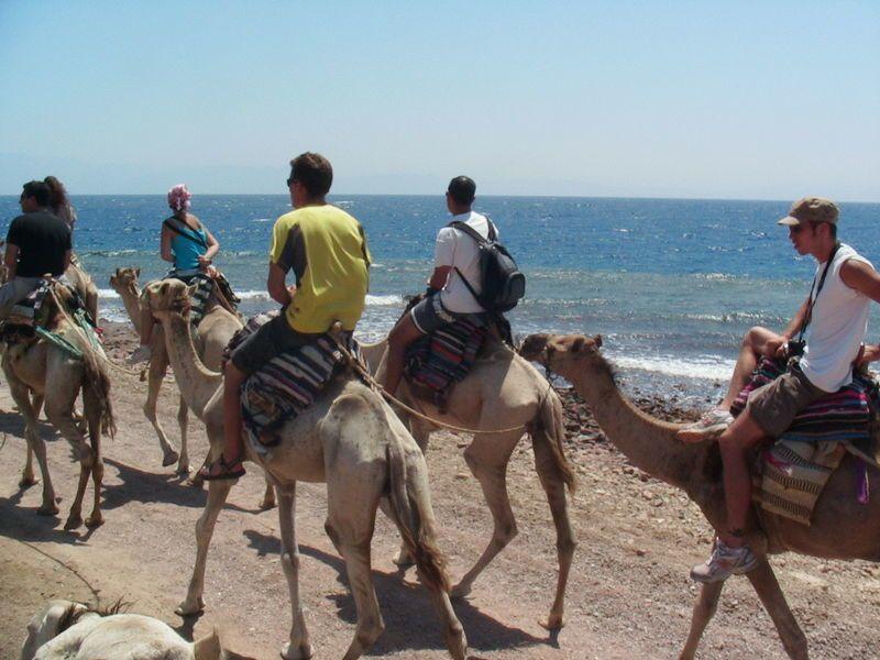 Taba à dos de chameau