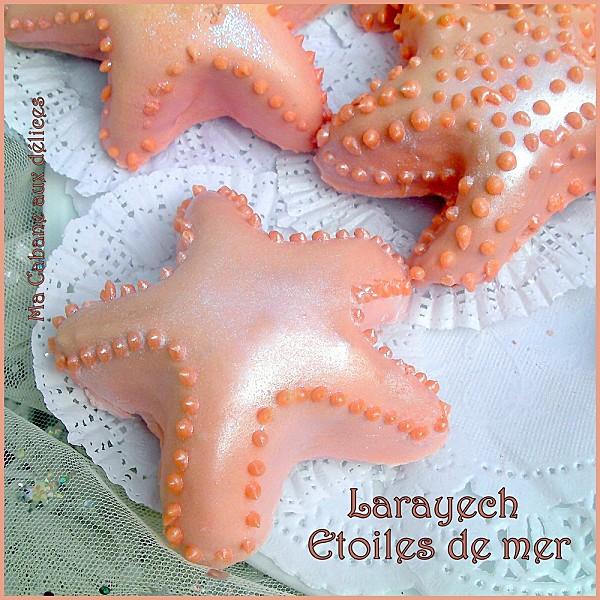 Larayech etoiles de mer photo 2