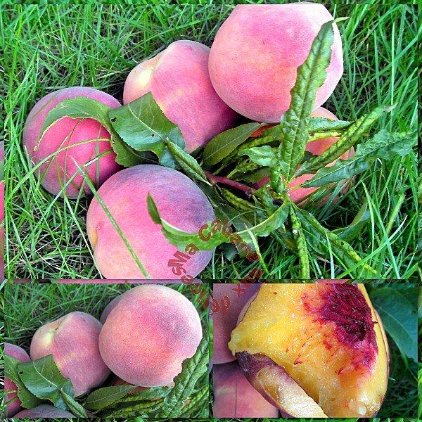 récolte des fruits du jardin