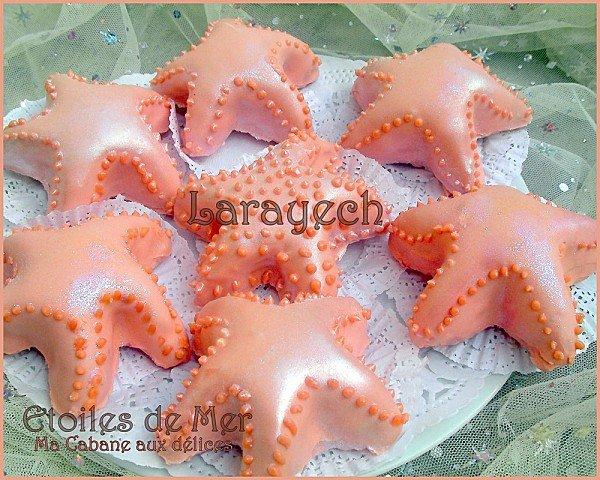 Larayech etoiles de mer photo 3