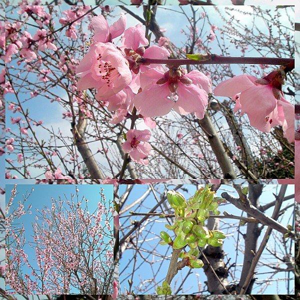 Retour-du-printemps.jpg