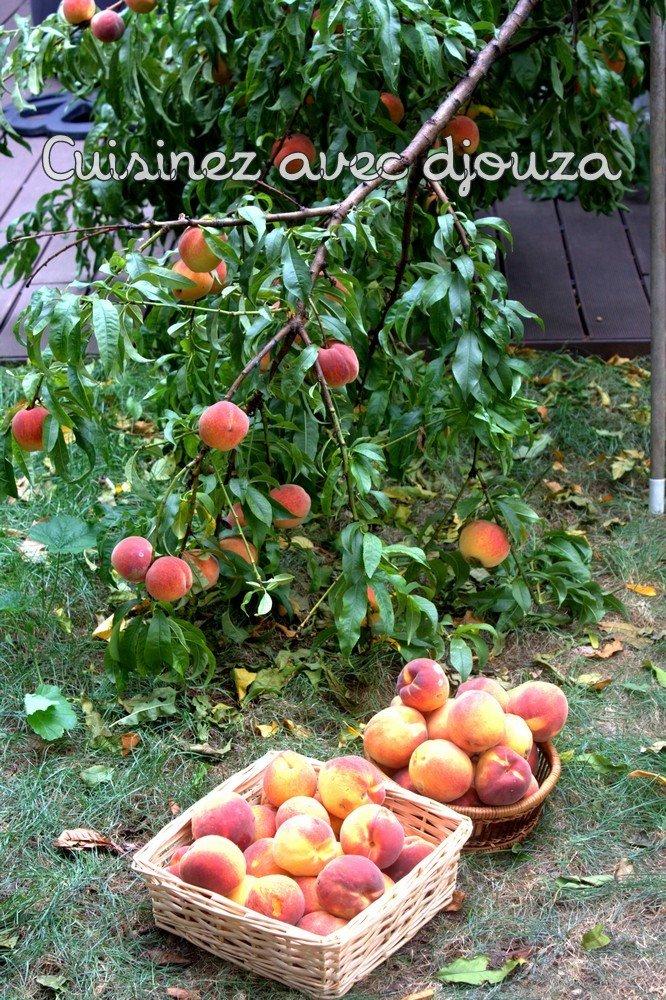 flan léger ou clafoutis aux peches et eau de fleur d'oranger