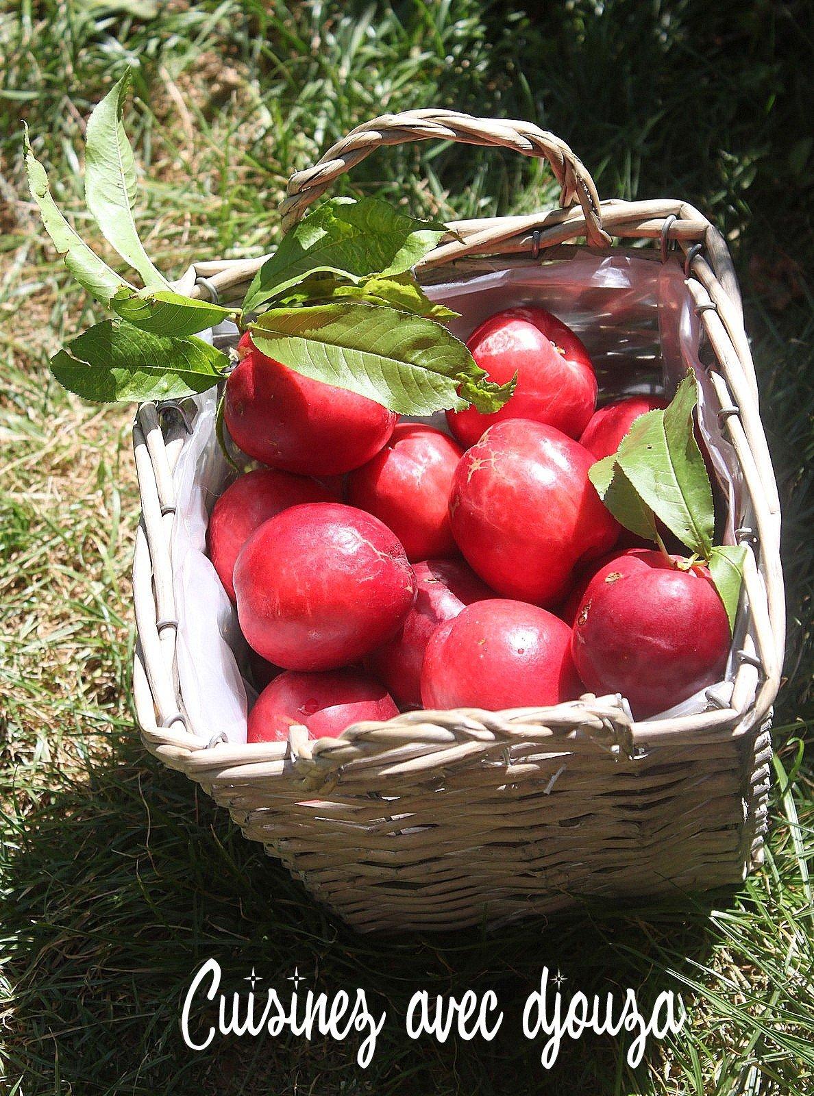 cueillettes des fruits du jardin