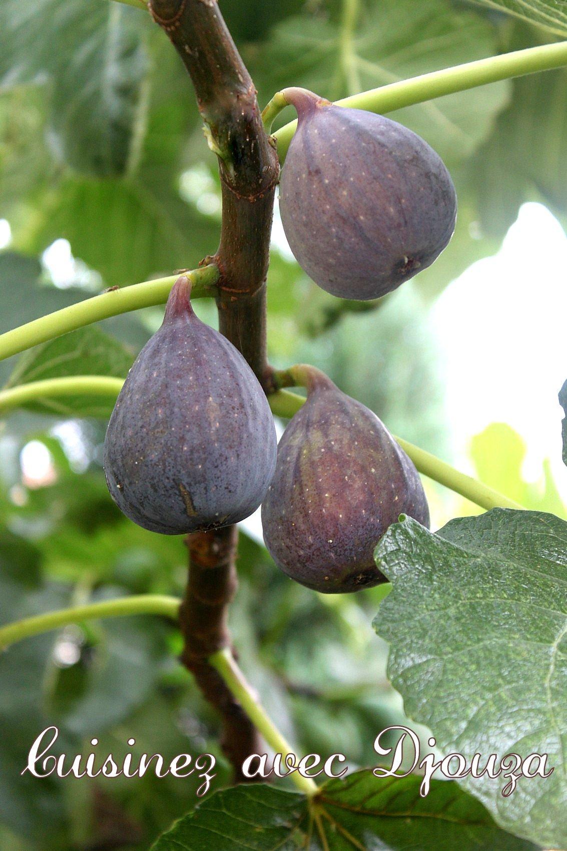 Tarte aux figues violettes