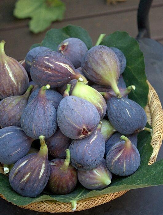 Trente recettes avec des figues